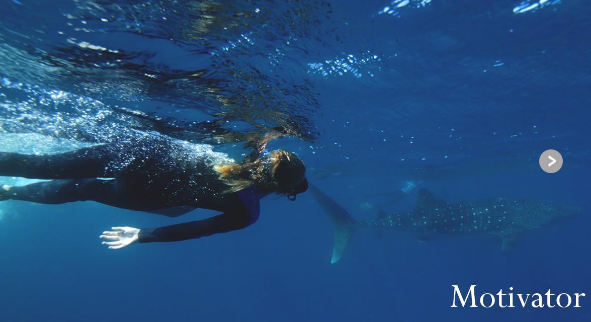 ocean whaleshark